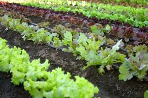 Gardens are as individual as their gardeners